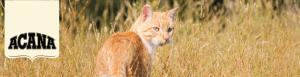 【アカナ】バナーCAT|動物往診+在宅ケア にくきゅう